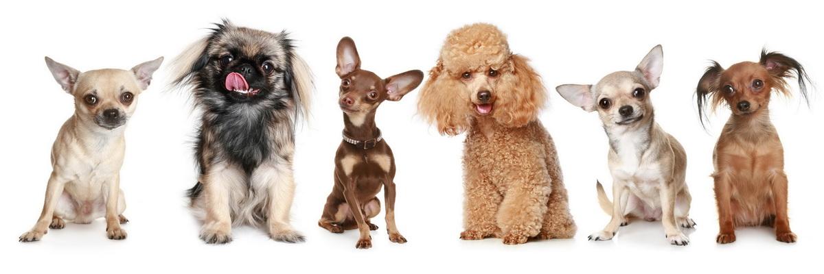 Стрижка собак и кошек в зоосалоне и зоотовары с доставкой на дом