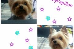 PicsArt_03-19-06.12.23