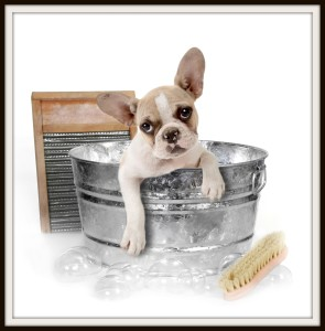 bigstock-Dog-Getting-A-Bath-In-A-Washtu-6276702